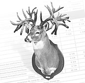 World Record Whitetail Deer