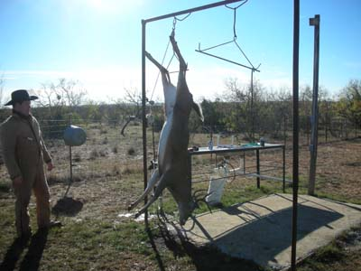 Aaron's 11 Point Whitetail hanging