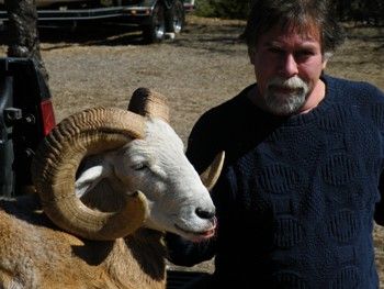 Hardy Grissom with a Blonde Texas Dall Ram