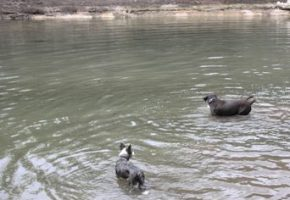 Luka and Dio playing in the Guadalupe River
