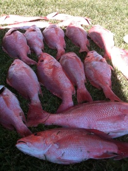 Red Snapper Fishing in Texas